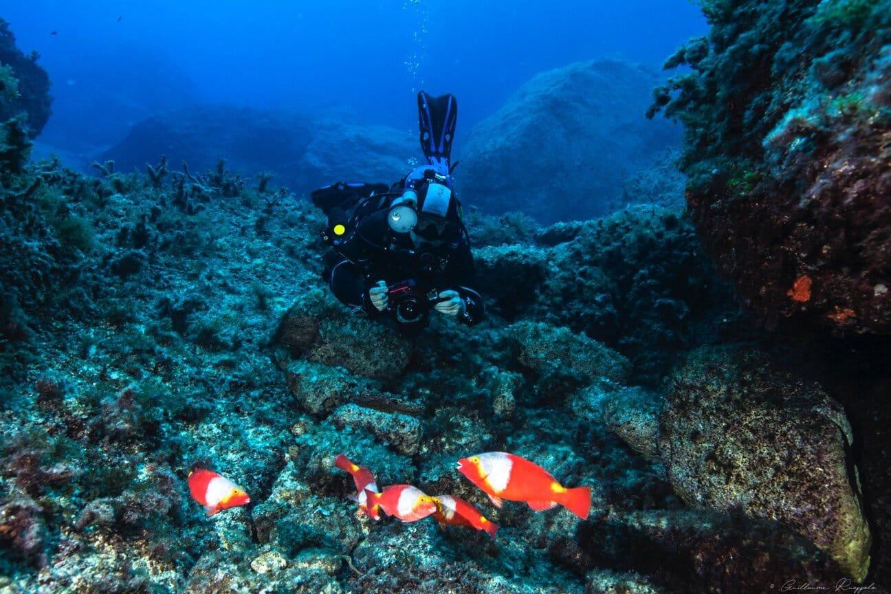 Málta búvárkodás támogatás nyaralás